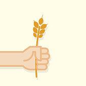 Hand holding golden wheat ear. Vector illustration, flat design