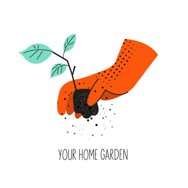 A hand in an orange protective glove holds a seedling. Vector illustration on a white background. Gardening. A hand in an orange protective glove holds a seedling. Vector illustration with vintage textures on a white background. gardening stock illustrations