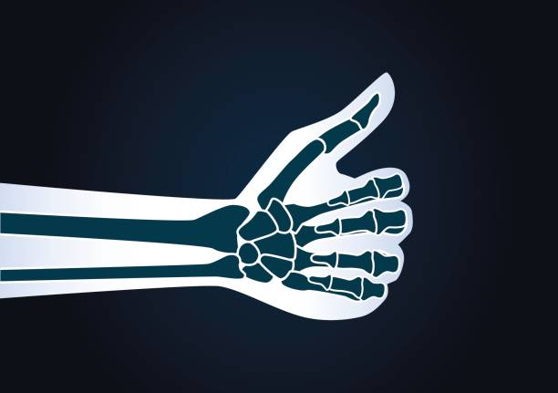 Hand make thumbs up gesture. Hand make thumbs up gesture. Illustration about health care concept. x ray image stock illustrations