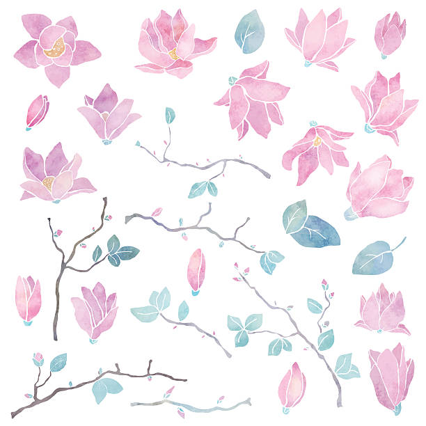 Hand painted magnolia flowers set Hand painted floral watercolor set, magnolia flowers, branches and leaves isolated on a white background - vector artwork wild rose stock illustrations