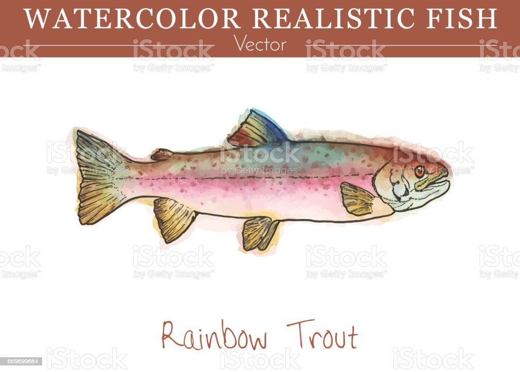 Hand painted watercolor edible fish. Vector design vector art illustration