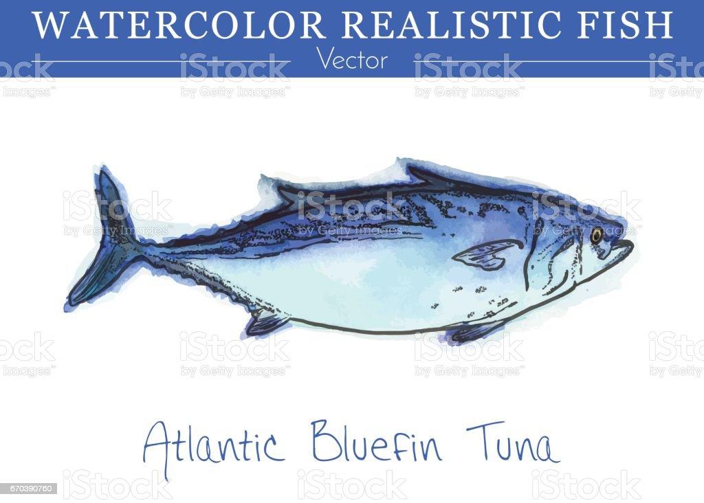 Hand painted watercolor edible fish. Vector design vector art illustration
