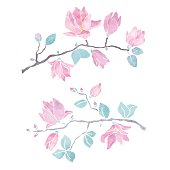 Hand painted watercolor magnolia branches