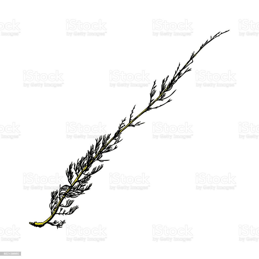 El Boyalı Ahşap Dal Mürekkep Rustik Tasarım öğesi Ahşap Ağaç Dalı Ve