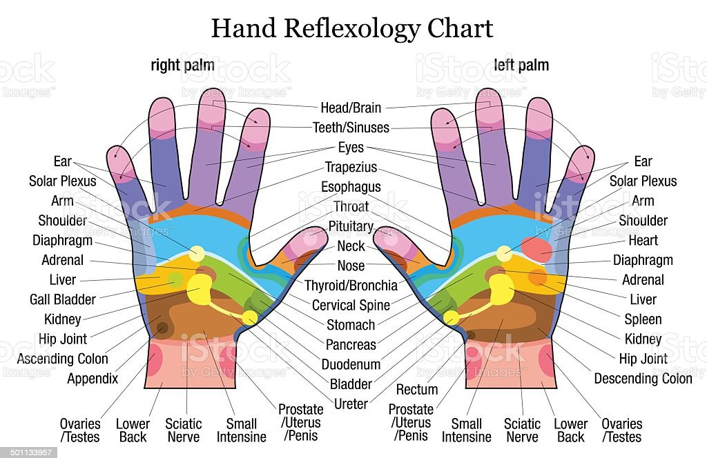 Hand reflexology chart description vector art illustration