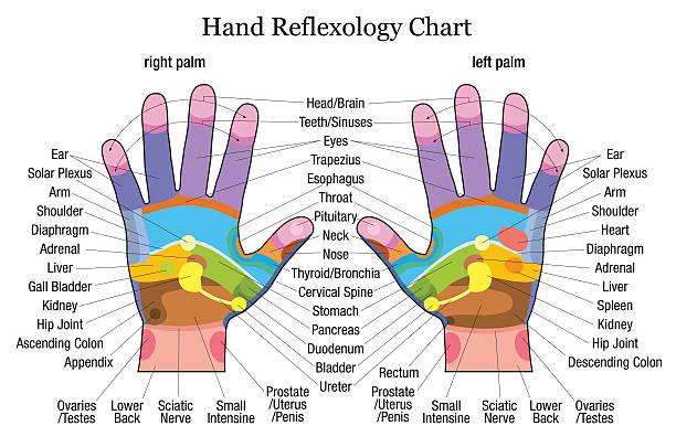 Hand reflexology chart description vector art illustration
