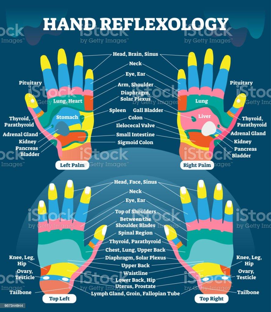 Ilustración de Mano Reflexología Masaje Terapia Médica Vector ...