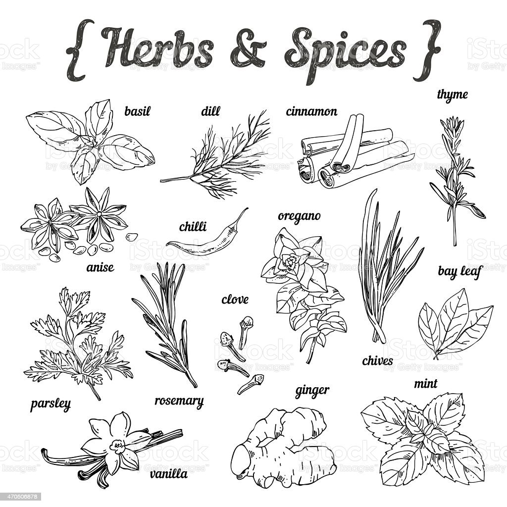 Hand sketched herbs and spices on white backgroundHand sketched herbs and spices on white background vector art illustration
