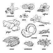Hand sketched spices for baking. Vintage spices illustrations