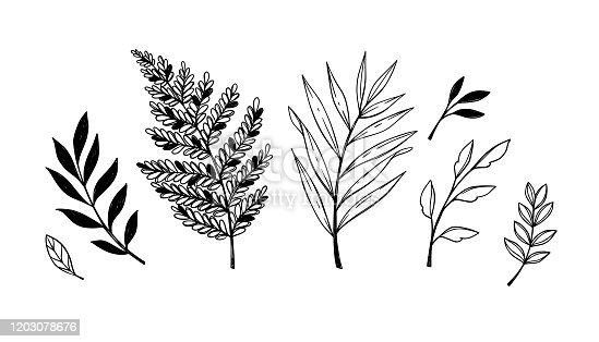 Hand sketched vector elements ( laurels, leaves, branches). Wild and free. Floral design elements. Perfect for invitations, greeting cards, prints, posters