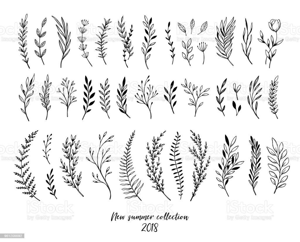Hand Sketched Vector Floral Elements Botanical Illustrations