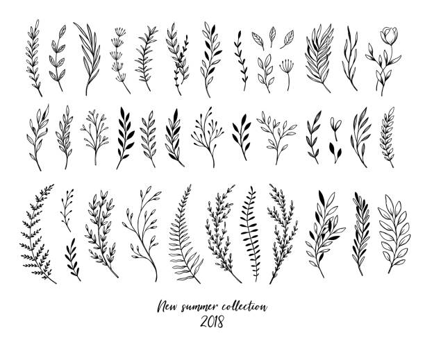 Hand sketched vector floral elements ( leaves, flowers, swirls and branches). Botanical illustrations. Perfect for wedding invitations, greeting cards, quotes, blogs, Frames Hand sketched vector floral elements ( leaves, flowers, swirls and branches). Botanical illustrations. Perfect for wedding invitations, greeting cards, quotes, blogs, Frames fern stock illustrations
