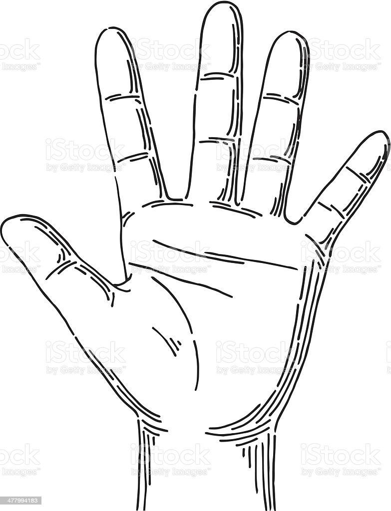 Hand Stock Vector Art & More Images of Anatomy 477994183 | iStock