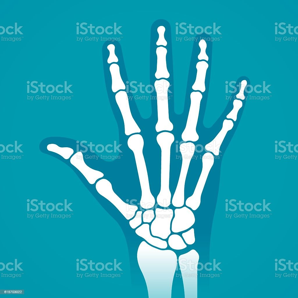 Hand X-Ray vector art illustration