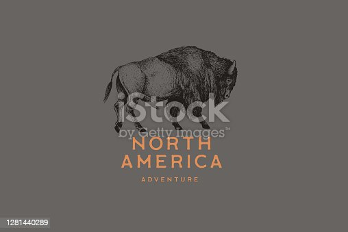 Hand-drawing of American bison in retro engraving style. Buffalo in graphic vintage style. Vector logo template.