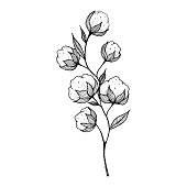 hand-drawn blooming cotton flowers. Sketch Drawn in black pen. Isolated on a white background. Trace to vector. Black and white design. Monochrome vintage vector illustration