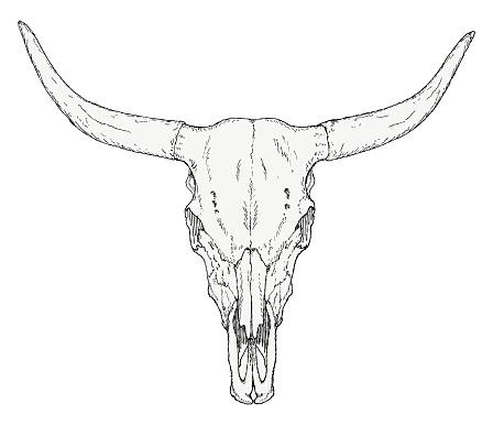 Hand-drawn bull skull