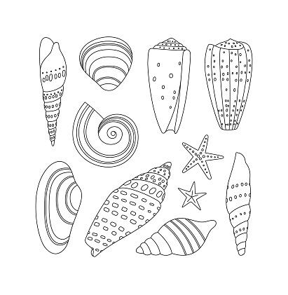 Hand-drawn collection of seashells and starfish.