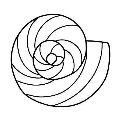 Hand-drawn doodle spiral seashell stock vector illustration