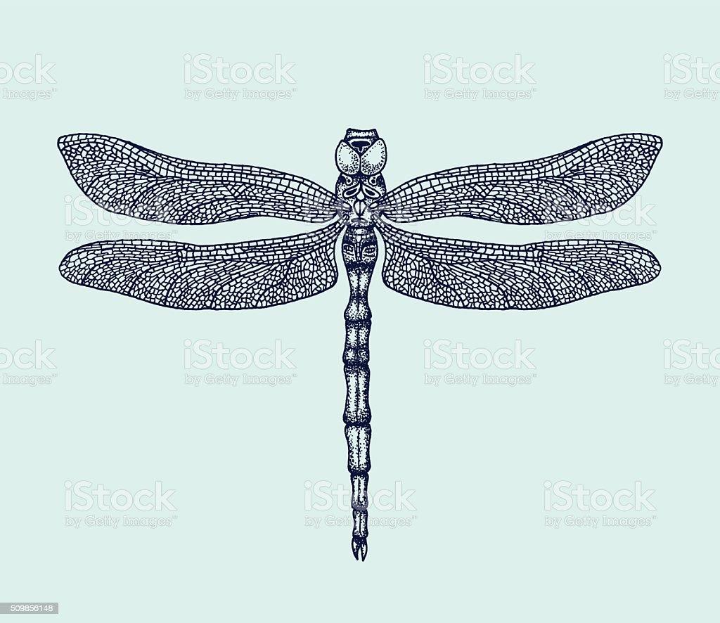 handdrawn dragonfly vector illustration stock vector art more rh istockphoto com dragonfly vector free dragonfly vector free download