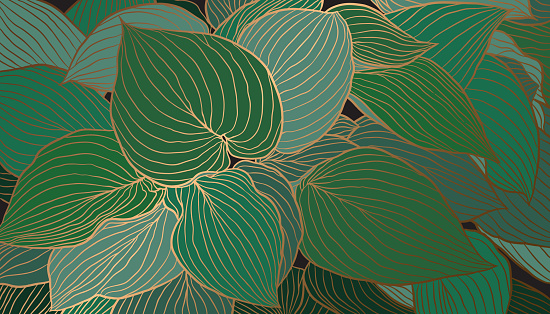 Hand-drawn emerald green Hosta leaves with copper metallic outline background vector