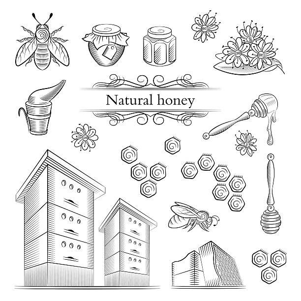 hand-drawn icons bees and honey. - bienenwachs stock-grafiken, -clipart, -cartoons und -symbole