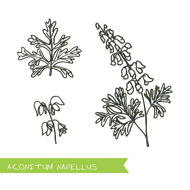 handdrawn illustration-gesundheit und natur-set - eisenhut stock-grafiken, -clipart, -cartoons und -symbole
