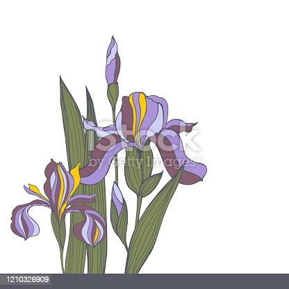 Hand-drawn iris flowers. Vector sketch illustration