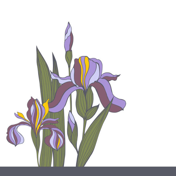 stockillustraties, clipart, cartoons en iconen met hand-drawn irisbloemen. vectorillustratie - iris plant