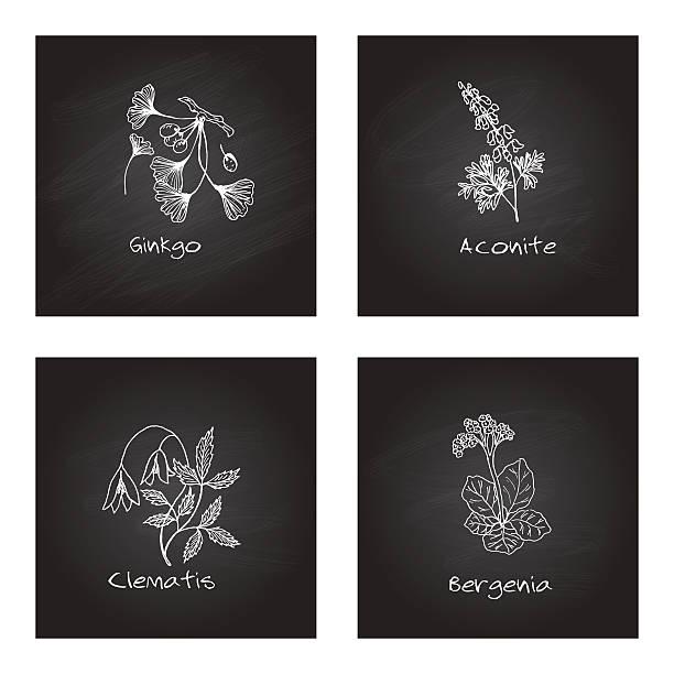 handdrawn medizinische kräuter-gesundheit und natur satz - eisenhut stock-grafiken, -clipart, -cartoons und -symbole