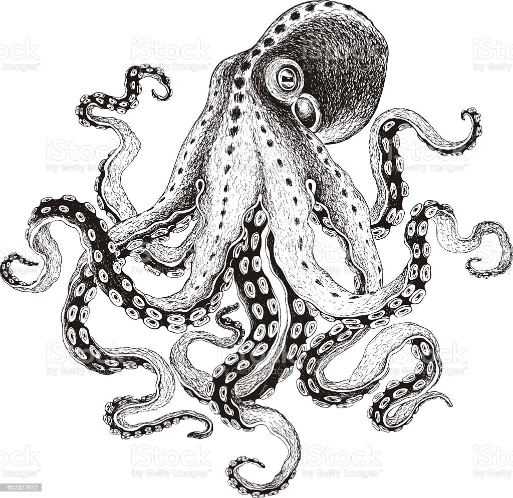 Hand-drawn Octopus, vector illustration. vector art illustration