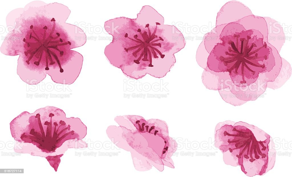 hand-drawn sakura flowers vector art illustration