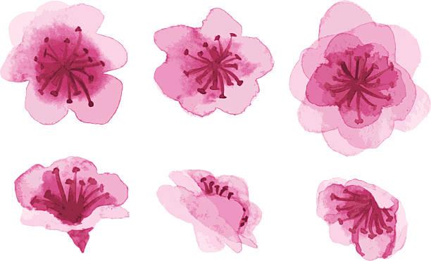 hand-drawn sakura flowers vector art illustration