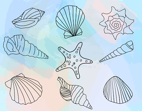 Hand-drawn seashell collection on watercolor background. Vector illustration