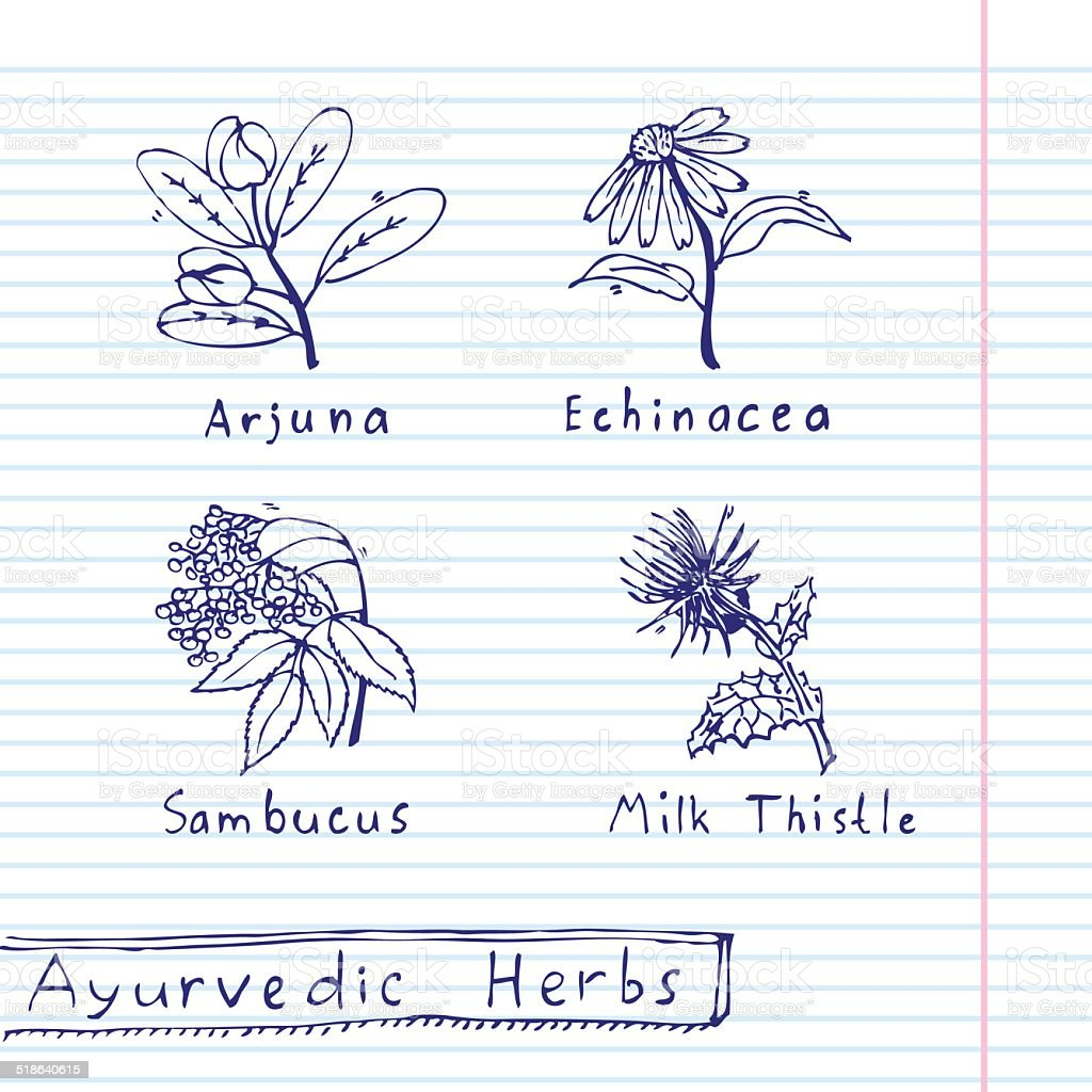 Handdrawn set - Ayurvedic Herbs vector art illustration