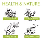 Handdrawn Set - Health and Nature. Collection of Medicine Herbs. Labels for Essential Oils and Natural Supplements. Ylang Ylang, Tangerine, Cedarwood, Juniper Berry