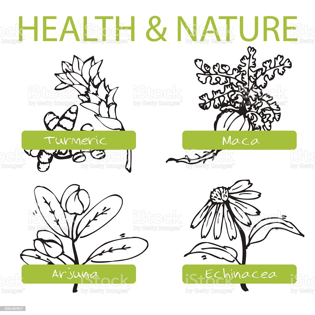 Handdrawn Set - Health and Nature. Collection of Medicine Herbs vector art illustration