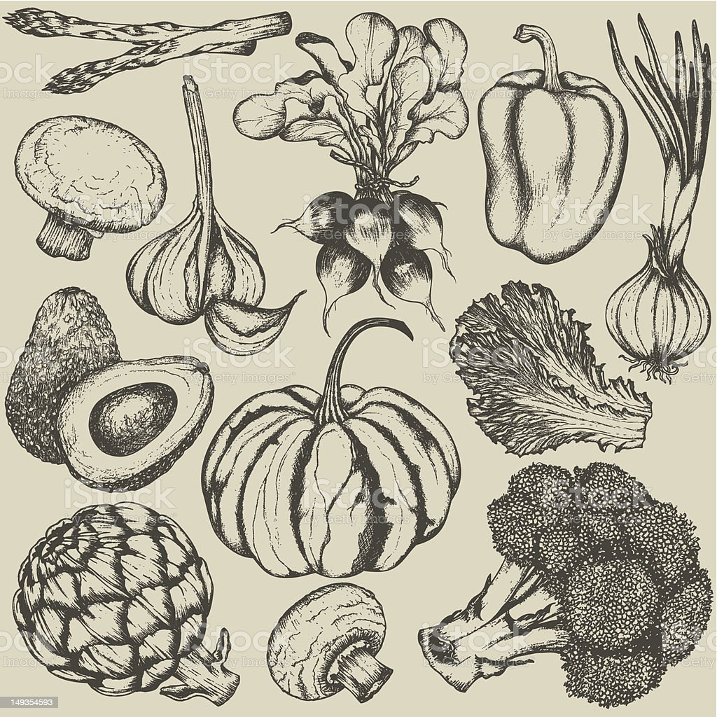 Hand-drawn set vegetables vector art illustration