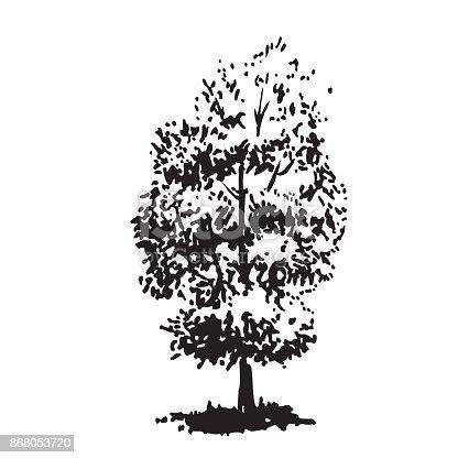handgezeichnete baum linden schwarz wei realistisches bild skizze gemalt mit tinte b rste stock. Black Bedroom Furniture Sets. Home Design Ideas