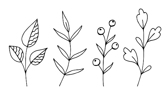 Hand-drawn vector floral set in black outline. Abstract branches, forest plants, berries, delicate twigs, stem and leaves. For prints, cards, stickers, elements of nature to create patterns.