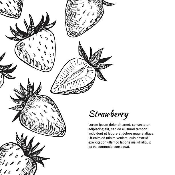 ilustrações de stock, clip art, desenhos animados e ícones de mão desenhada ilustração vetorial. cartão ou banner com morango. - strawberry