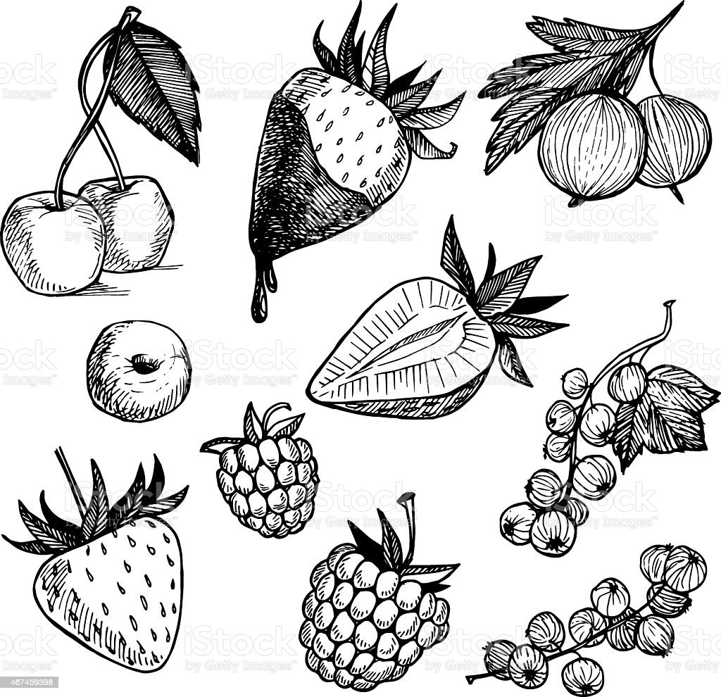 Hand-drawn vector illustration. Collection of  berries. Isolated vector art illustration