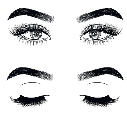 Hand-drawn woman's sexy luxurious eye with perfectly shaped eyebrows and full lashes.