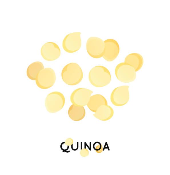 ilustrações de stock, clip art, desenhos animados e ícones de a handful of quinoa seed. cereals quinoa illustration - quinoa