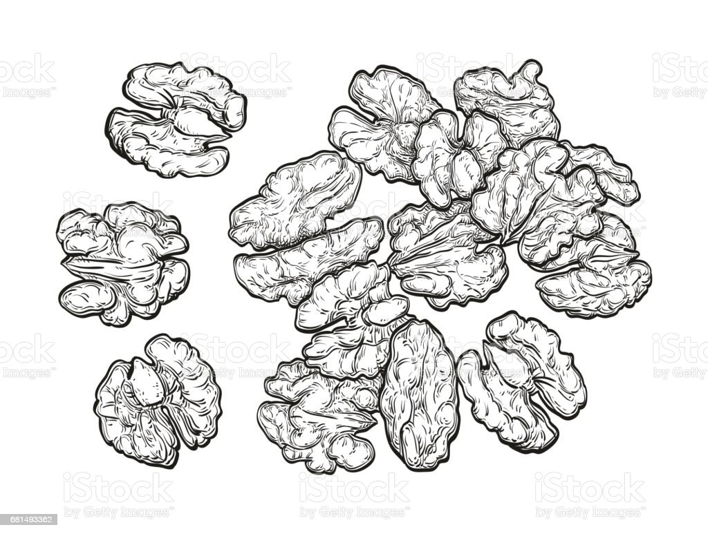 Handful of walnuts. royalty-free handful of walnuts stock vector art & more images of collection