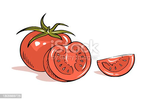 istock Handmade illustration of tomato vegetables on white background 1305669725