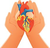 Conceptual illustration representing two hands holding an anatomic heart.