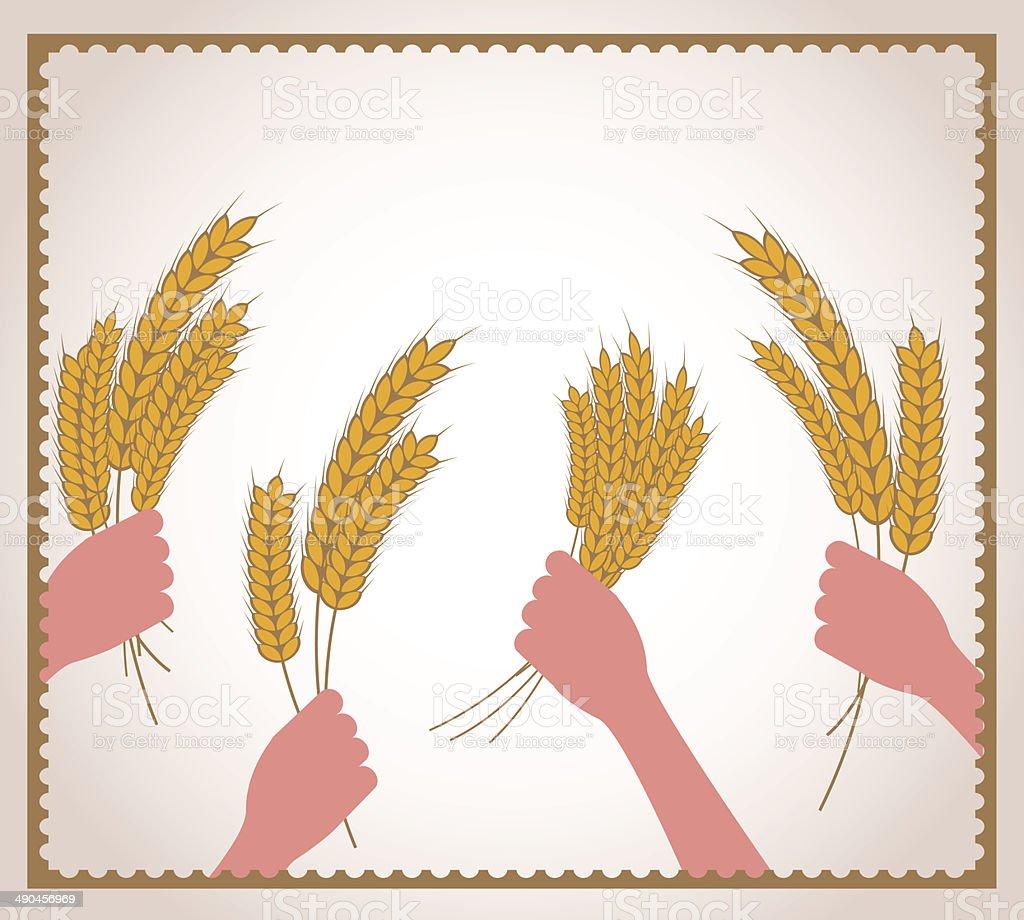 hands holding fresh wheat vector art illustration