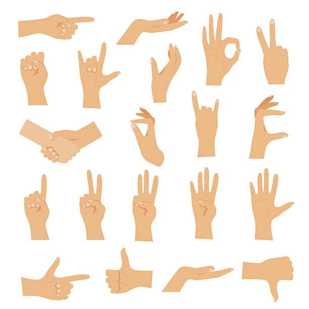 bildbanksillustrationer, clip art samt tecknat material och ikoner med hands in various gestures. flat design modern vector - stillsam scen