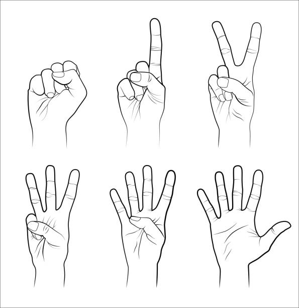 Hands Counting woman hands (0 to 5) isolated on white background counting stock illustrations